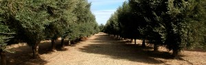 banner1-innovacion-y-tecnologia-olivicola