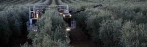 banner4-innovacion-y-tecnologia-olivicola