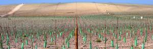 banner5-innovacion-y-tecnologia-olivicola