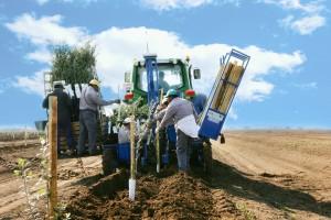 plantaciones-de olivar-llave-en-mano