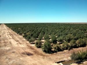 Plantaciones de olivar