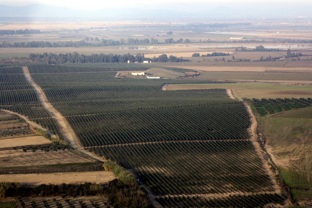 Plantaciones de olivar de alta densidad