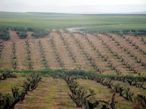 Plantaciones-de-olivar