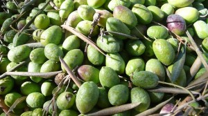 Plantaciones de olivar intensivo