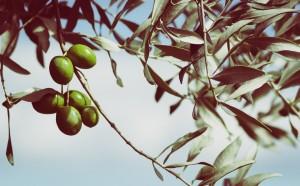 olives-945749_960_720