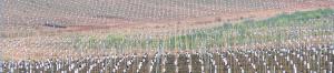 Plantaciones intensivas