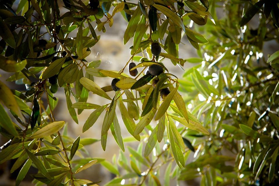 olives-789140_960_720