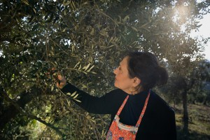 Mature woman picking olives