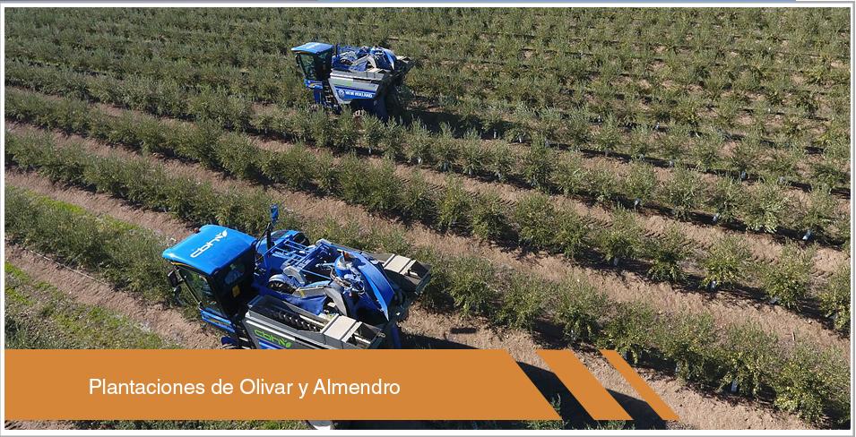 Plantaciones de Olivar CBH Serv