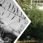 Del cultivo tradicional a la reconversión del olivar