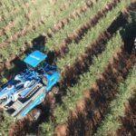 El olivar de alta densidad sostenible, un sistema de producción eficiente