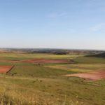 El cultivo secano