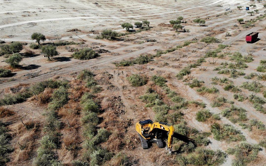 Subvenciones desde el 50% para Inversiones en Explotaciones Agrarias