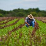 Agricultura extensiva ¿qué es y qué características tiene?